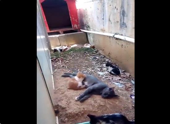 İstenmeyen gebeliğinin sorumlusu beslediği kedi çıktı