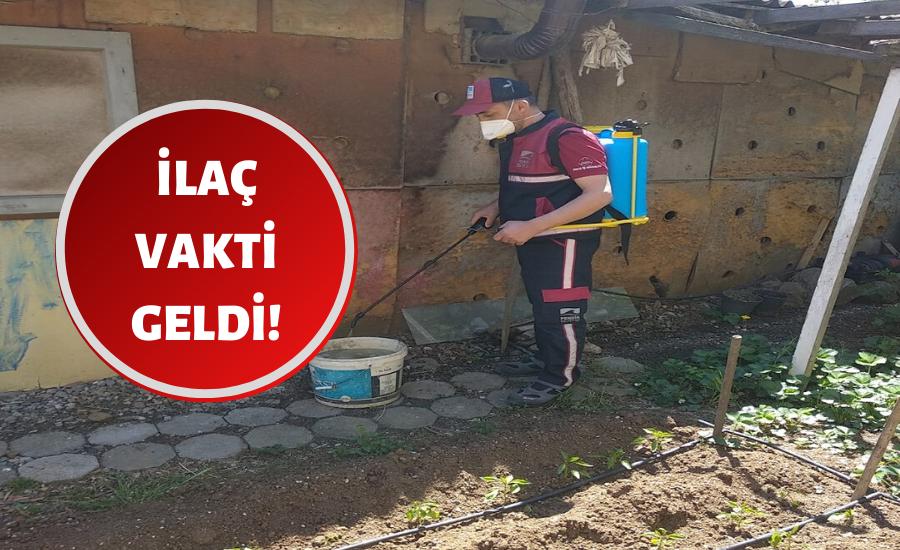 Pendik'te sivrisinekle mücadele başladı