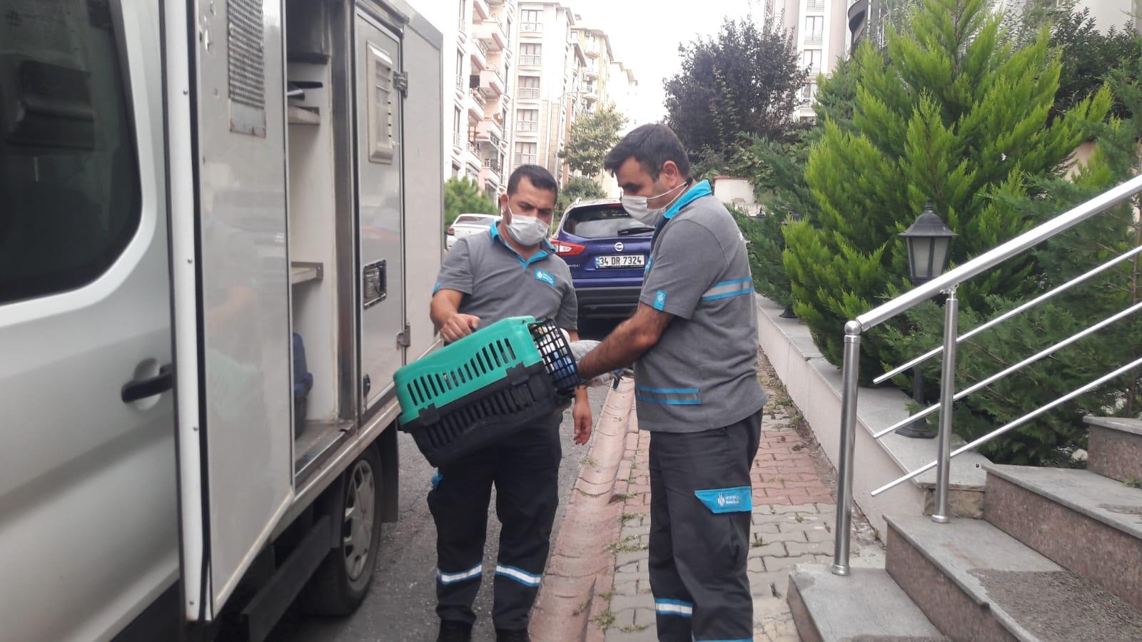 Çatıdaki Yaralı Martıya Belediye Ekipleri Müdahale Etti